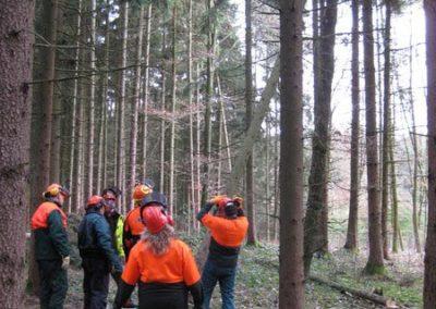 Kurs zum Baumfällen